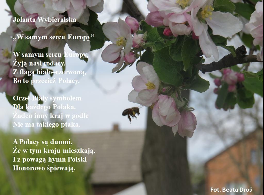 Wiersz J. Wybieralska W samym - Droś.jpeg