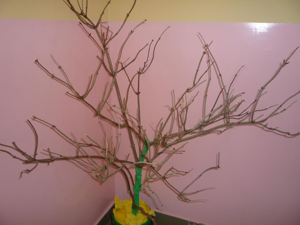 Drzewko.jpeg